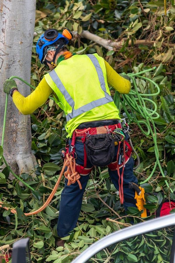 Un trimmer d'arbre avec la vitesse préparant pour s'élever images stock