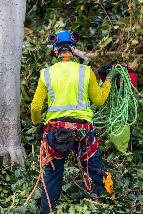 Un trimmer d'arbre avec la vitesse préparant pour s'élever images libres de droits