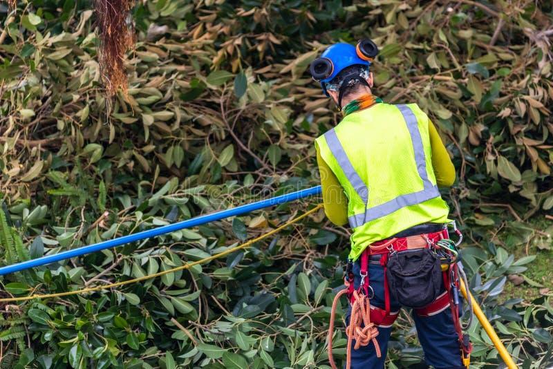 Un trimmer d'arbre avec la vitesse préparant pour s'élever photo stock