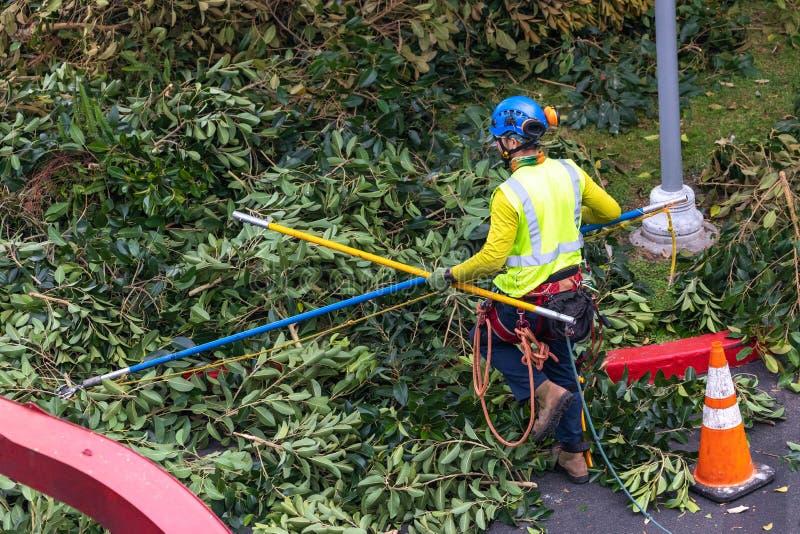 Un trimmer d'arbre avec la vitesse préparant pour s'élever image stock