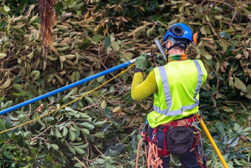 Un trimmer d'arbre avec la vitesse préparant pour s'élever photos stock