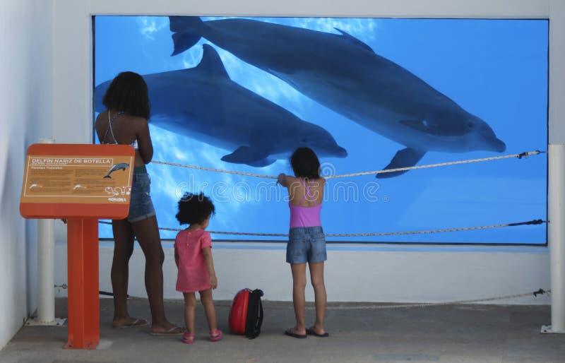 Un trio delle sorelle guarda i delfini a Delphinario, la sonora, Mex fotografie stock libere da diritti