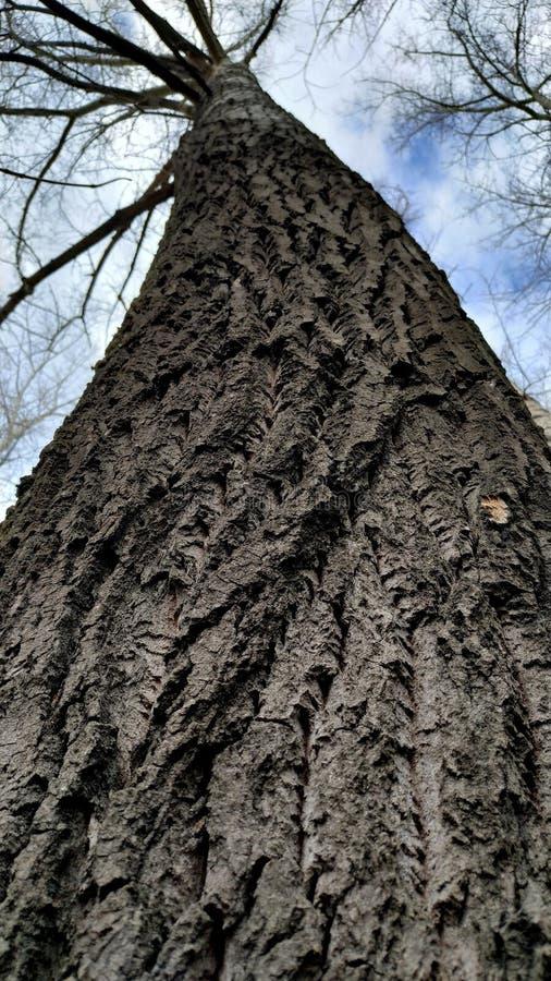 Un tronc d'arbre avec des branches contre le ciel et les nuages, tir d'un angle faible Plan rapproch? images stock