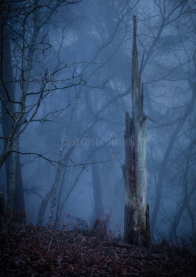 Un tronc d'arbre brisé dans une forêt brumeuse photo libre de droits