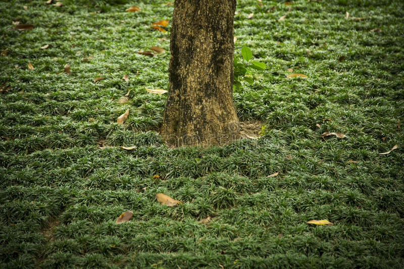 Un tronc solitaire d'un arbre parmi l'herbe image libre de droits