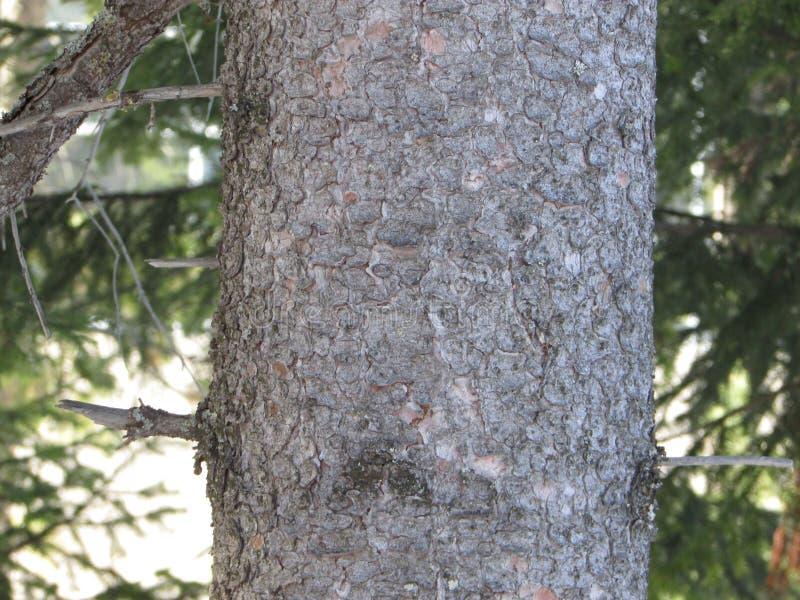 Un tronco de árbol imagen de archivo libre de regalías