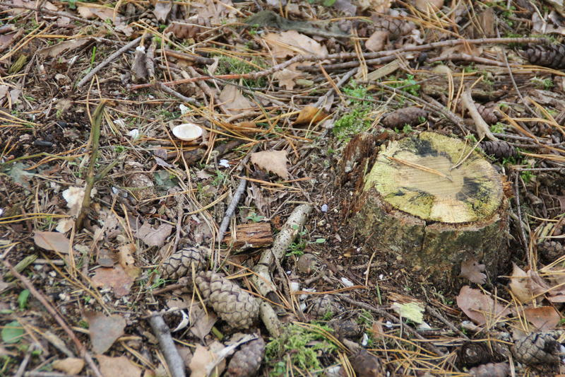 Un tronco de árbol en la tierra que rodea por las hojas imagen de archivo libre de regalías