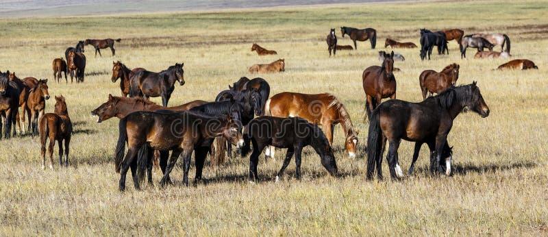 Un troupeau de chevaux avec de jeunes poulains photo libre de droits