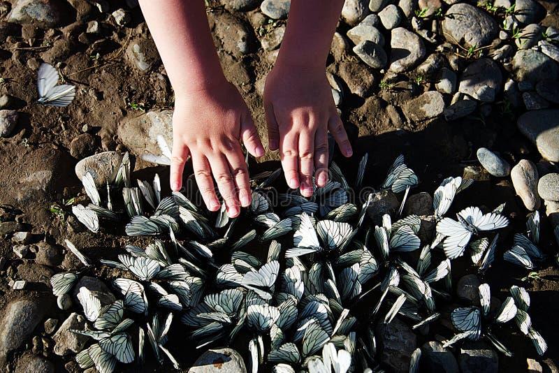 Un troupeau des papillons blancs est situé sur la banque rocheuse de la rivière photos stock