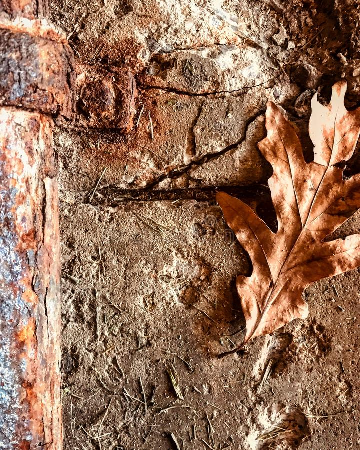 Un tuyau rouillé saigne dans le béton et une feuille brune images stock