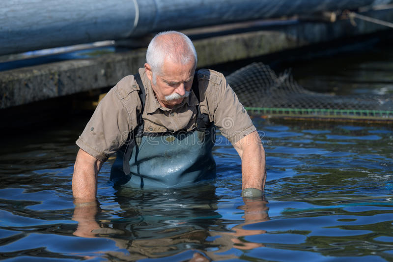 Un type plus âgé dans l'eau à la ferme de caviar photo libre de droits