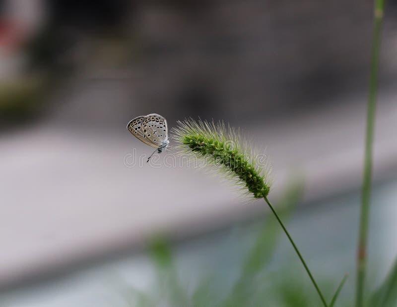 Un'ubicazione della farfalla sull'erba fotografia stock libera da diritti
