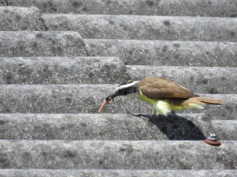 Un uccello affamato immagini stock