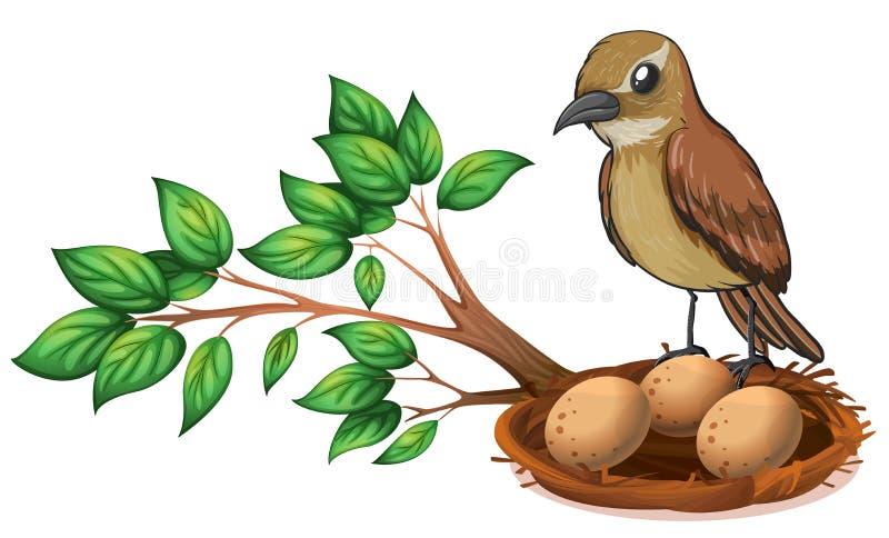 Un uccello al ramo di un albero che guarda il nido royalty illustrazione gratis