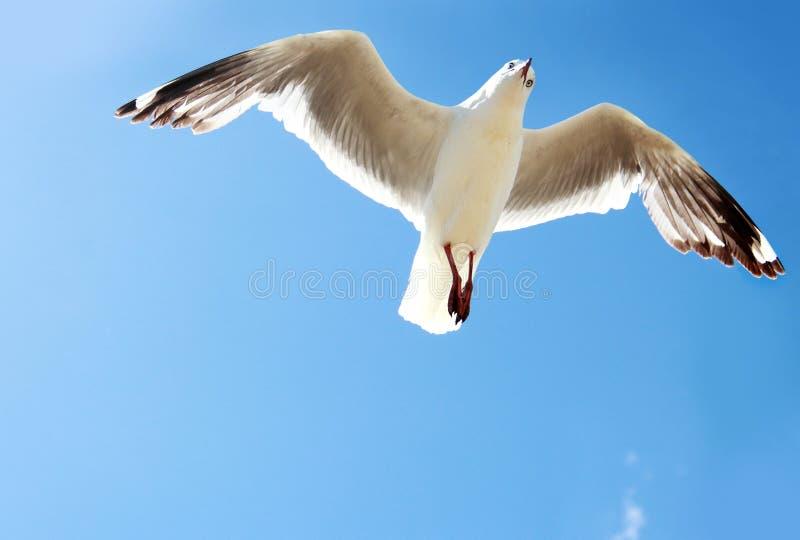Un uccello che vola su nel cielo blu immagini stock libere da diritti