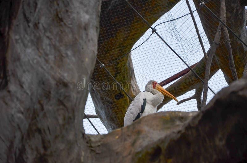 Un uccello con una bocca lunga immagine stock libera da diritti