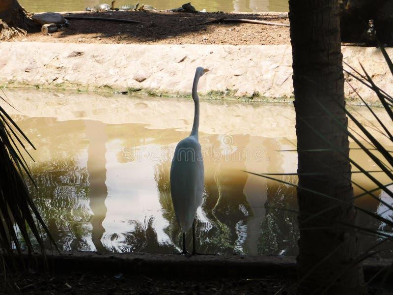 Un uccello davanti ad un lago fotografia stock