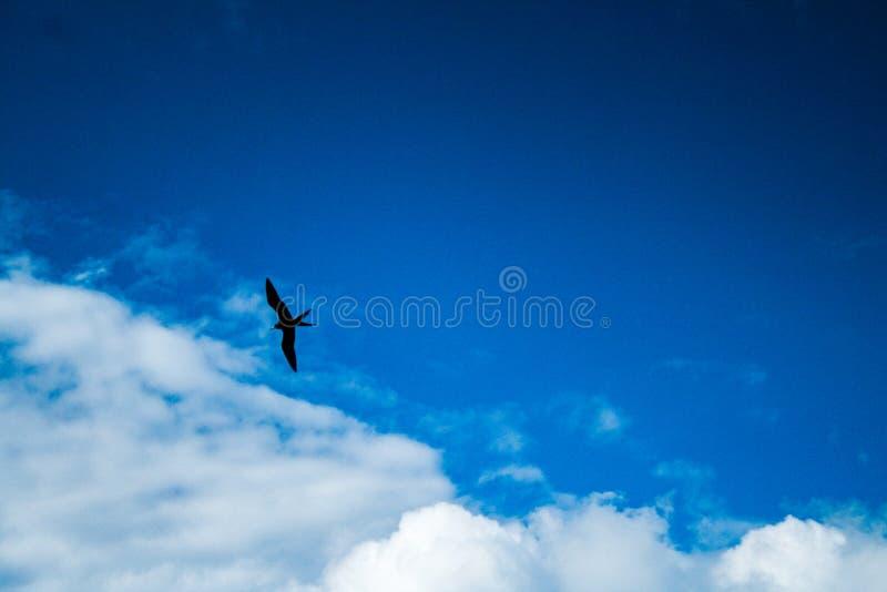 Un uccello nel cielo blu fotografie stock