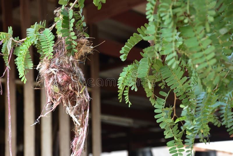 Un uccello nel nido del ` s dell'uccello fotografia stock