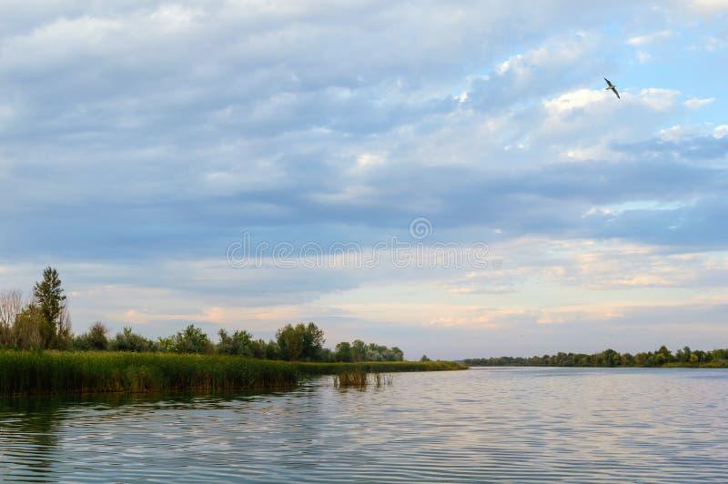 Un uccello sorvola un piccolo fiume fotografia stock libera da diritti