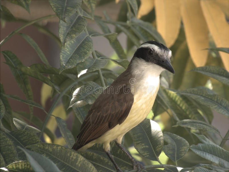 Un uccello sui rami immagini stock libere da diritti