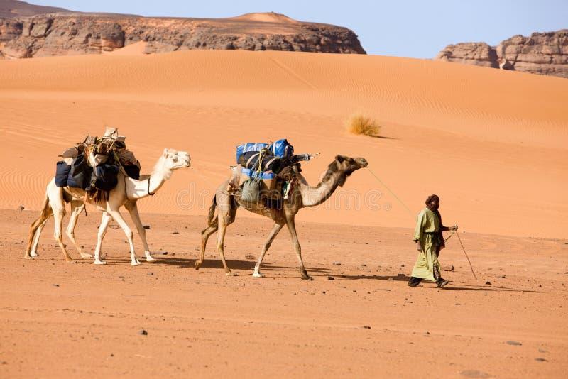 Un uomo con i cammelli, Libia fotografia stock libera da diritti