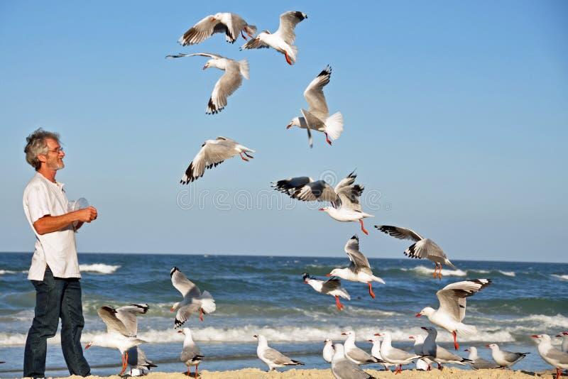 Un uomo da solo sui gabbiani d'alimentazione della spiaggia a mano. fotografia stock libera da diritti