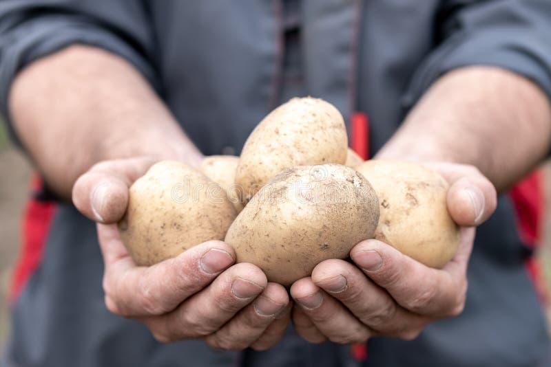 Un uomo in vestiti da lavoro che tengono le patate sulle sue mani tese fotografie stock libere da diritti