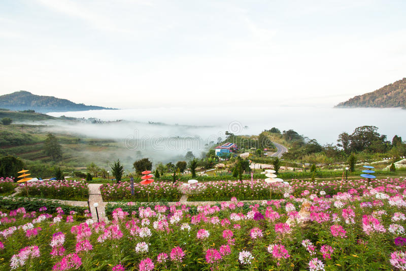 Download Un Valle Que Se Sienta Por El Agua Con Niebla Y Plantas Imagen de archivo - Imagen de granja, botánica: 41903863