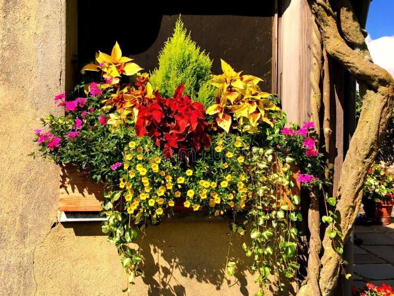 Un vaso dei generi differenti conservati in vaso di fioritura dei fiori immagine stock
