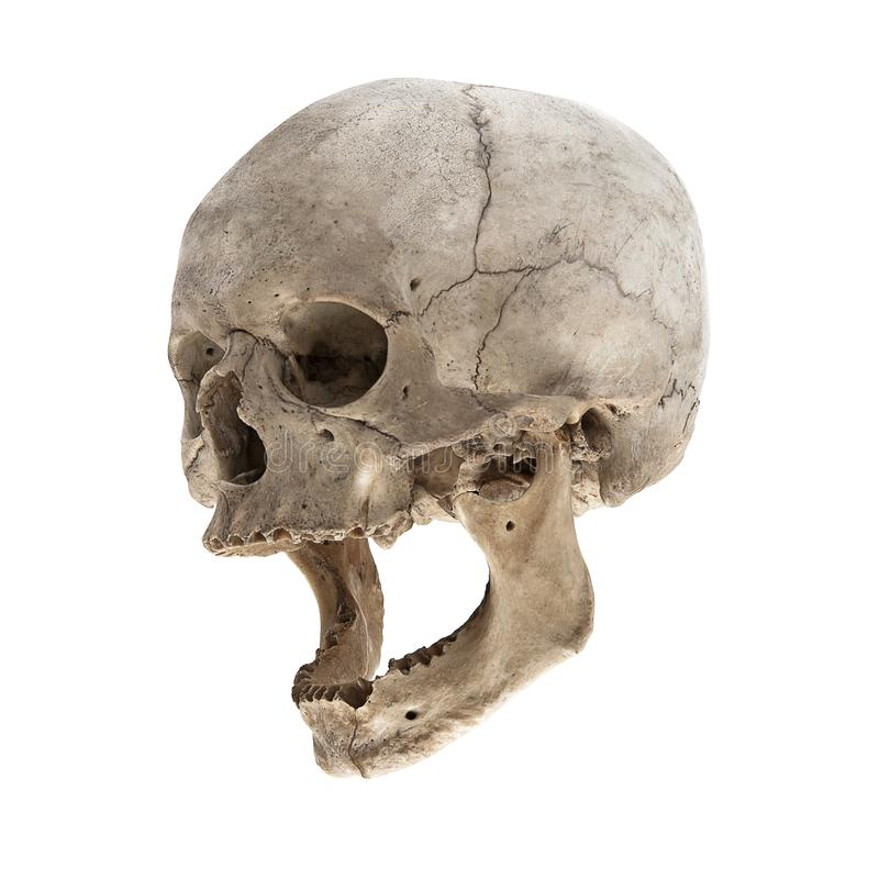Un vecchio cranio umano con una mandibola fotografia stock