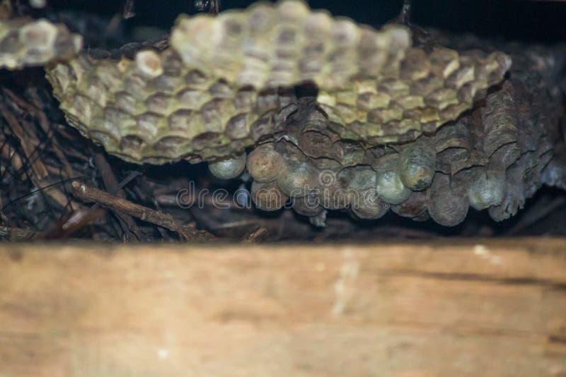 Un vecchio nido del favo dentro una scatola di legno Nessun api dentro fotografia stock libera da diritti