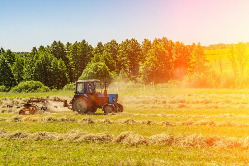Un vecchio trattore gira il fieno falciato su una mattina soleggiata dell'estate per migliore essiccazione Foraggio per le mucche fotografie stock