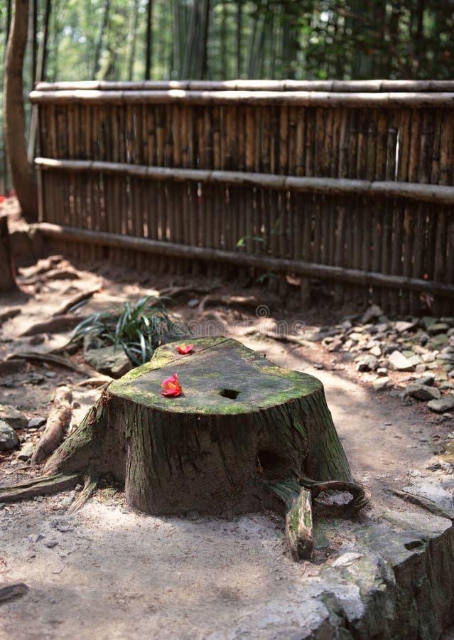 Un vecchio tronco di albero di legno ha affettato il fondo fotografia stock libera da diritti