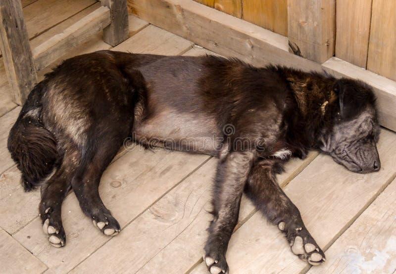 Un vecchio wrinlked fa la presa del resto su un pavimento di legno fotografia stock libera da diritti