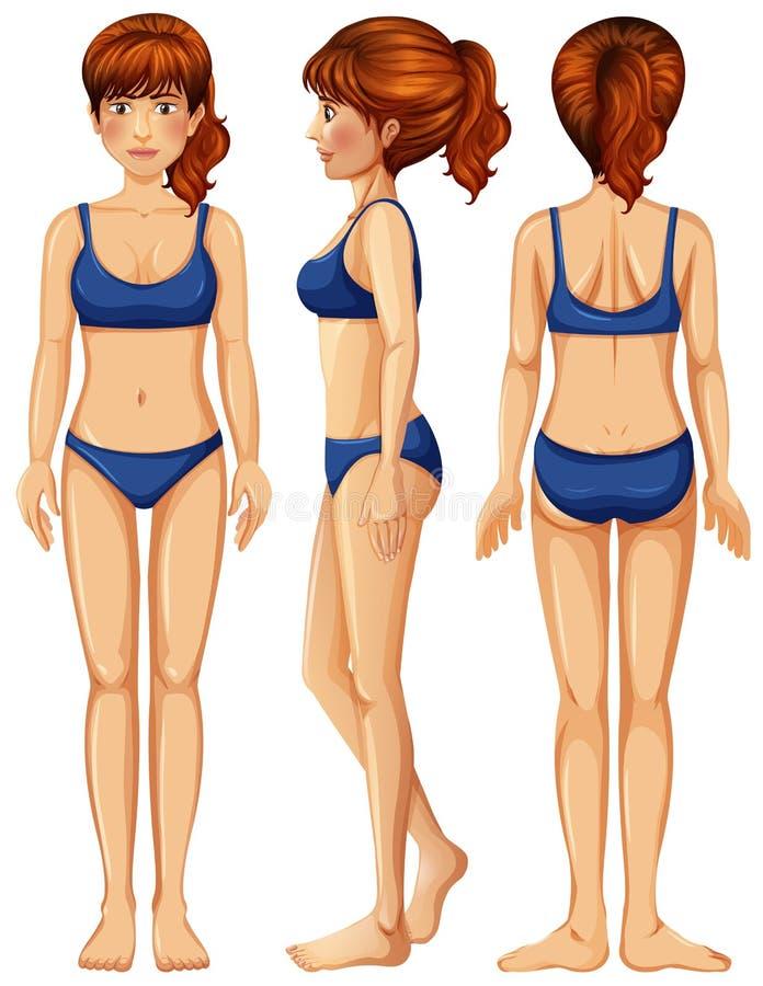 Un vecteur de corps féminin illustration stock