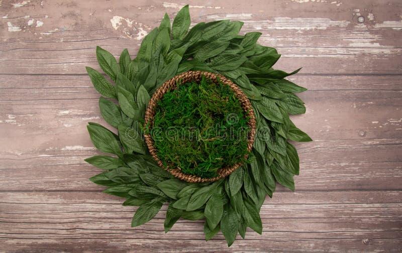Un verde Moss Digital Newborn Backdrop del giro per i fotografi neonati fotografia stock