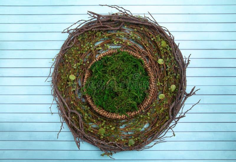 Un verde Moss Digital Newborn Backdrop del giro per i fotografi neonati fotografia stock libera da diritti