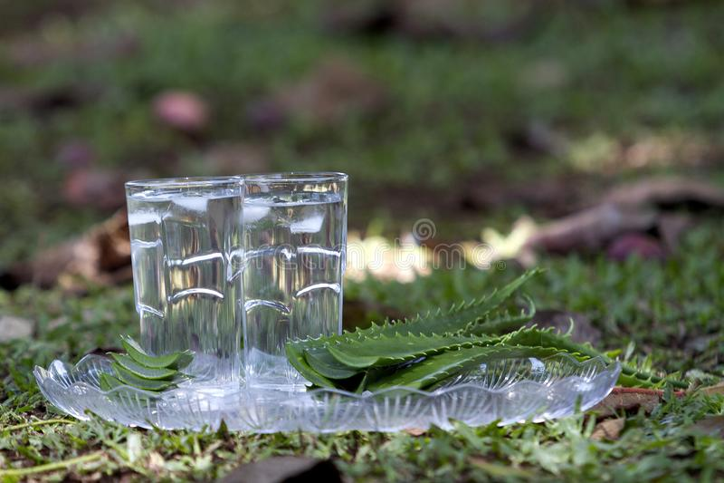 Un verre de jus de Vera d'aloès avec des feuilles de Vera d'aloès photo stock