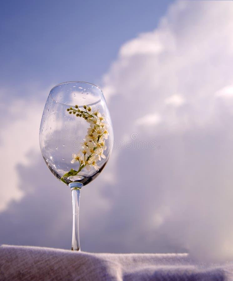 Un vetro con un ramoscello dei supporti della ciliegia di uccello su un tovagliolo del tessuto sulla banca del fiume sotto il sol fotografie stock
