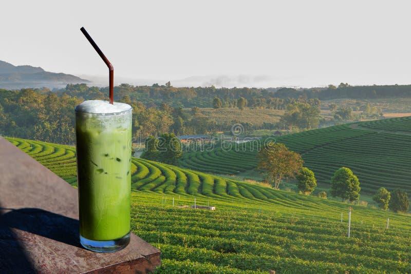 Un vetro dei frullati del tè verde nel planati organico del tè verde fotografia stock libera da diritti