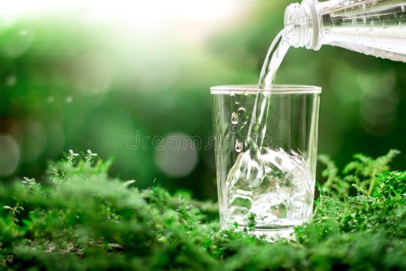 Un vetro di acqua dolce fresca su fondo verde naturale fotografia stock libera da diritti