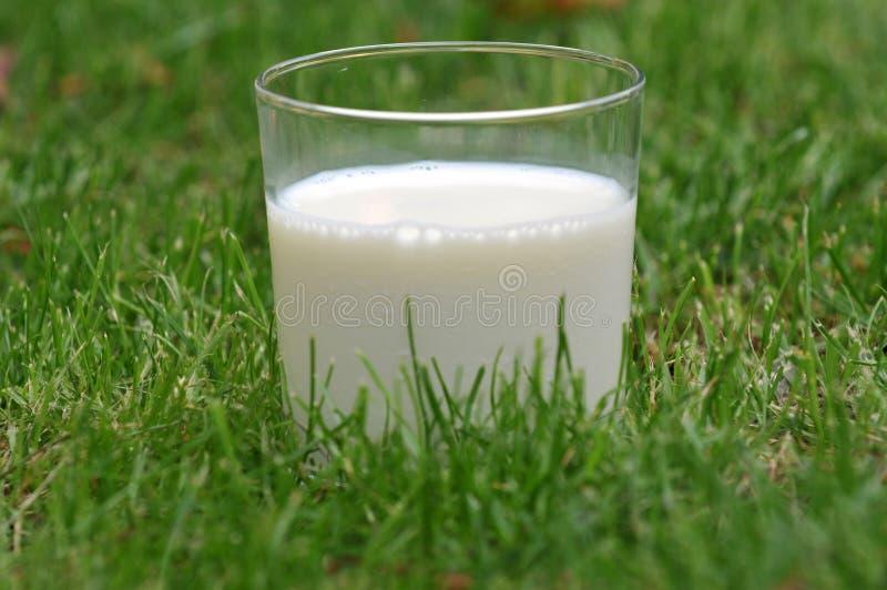 Un vetro di latte fresco nell'erba fotografie stock libere da diritti