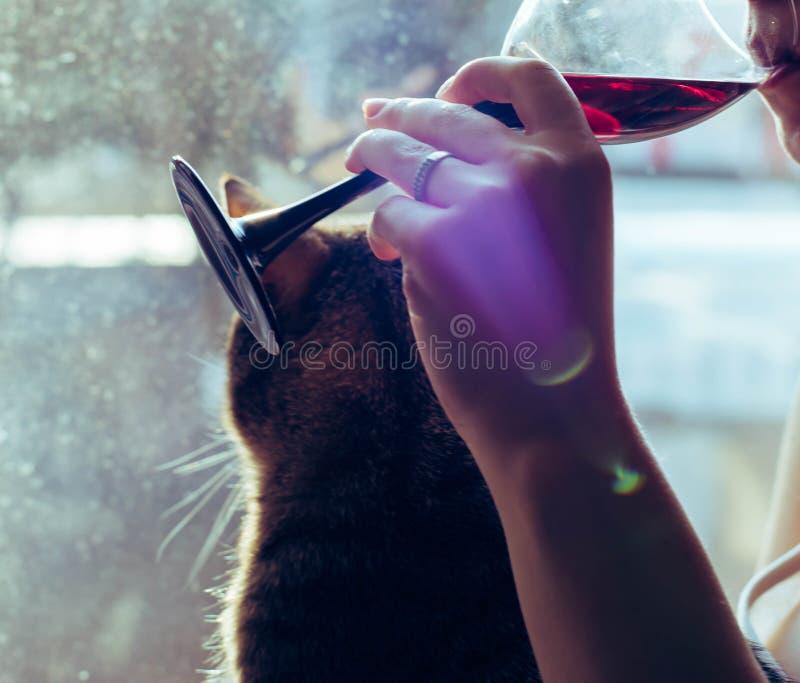 Un vetro di vino rosso nelle mani di una ragazza immagini stock