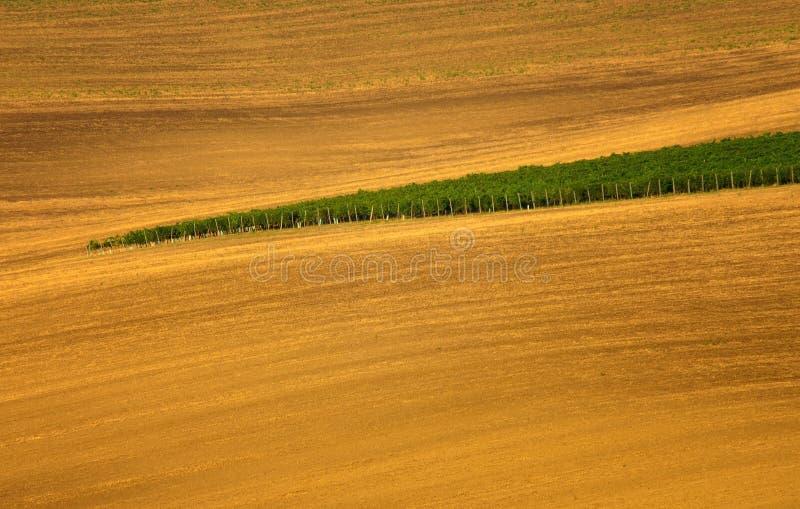 Un viñedo en República Checa imagen de archivo