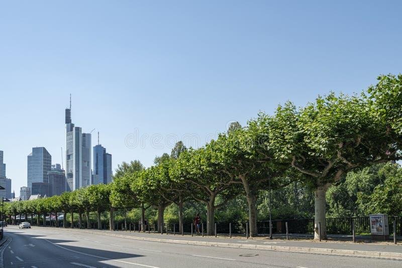 Un viale alberato a Francoforte immagini stock libere da diritti