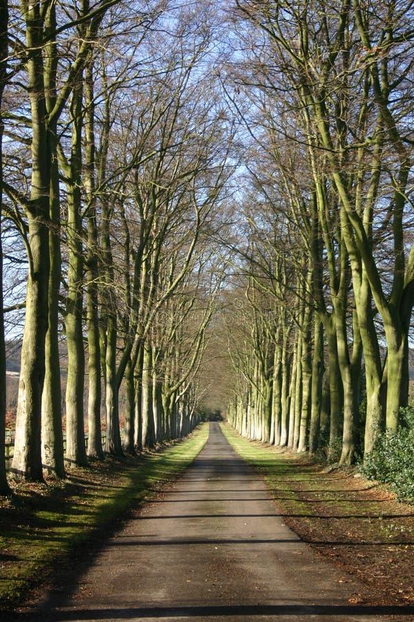 Un viale dei faggi in autunno immagini stock libere da diritti