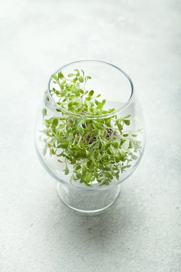 Un vidrio de cristal del alcohol se llena de verdes micro Forma de vida sana, dieta, desintoxicación imagenes de archivo
