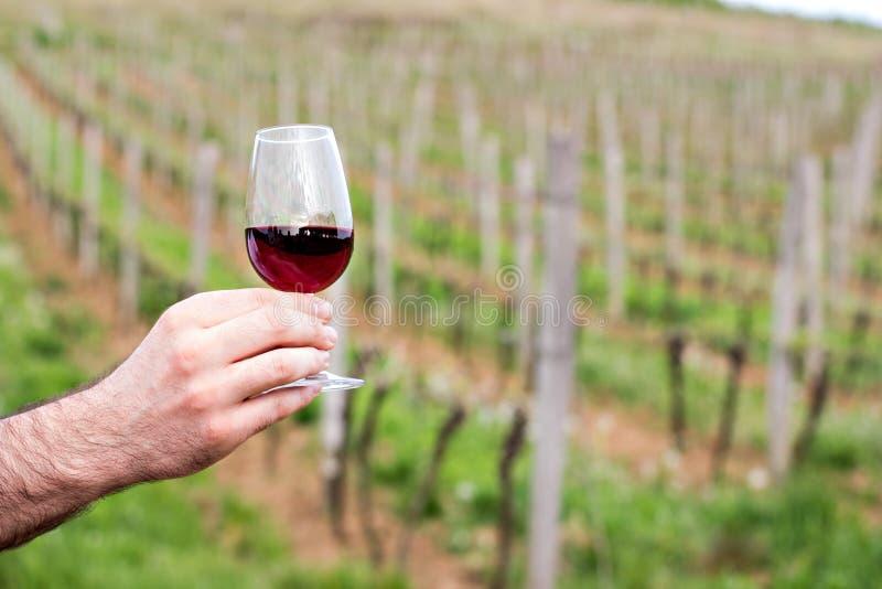 Un vidrio de vino rojo en la mano de un hombre imagen de archivo