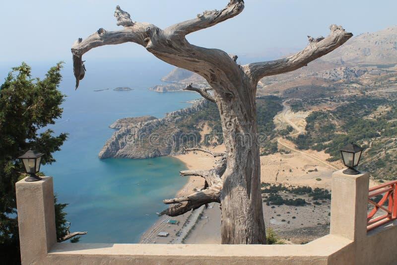 Un vieil arbre photographie stock libre de droits